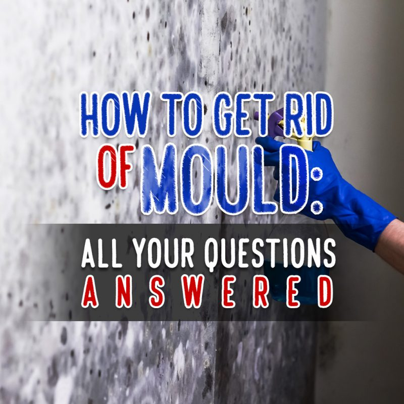 How to Get Rid of Mould: All Your Questions Answered